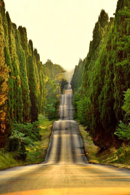 Viale dei cipressi di Bolgheri in Toscana - Cypress avenue of Bolgheri in Tuscany.