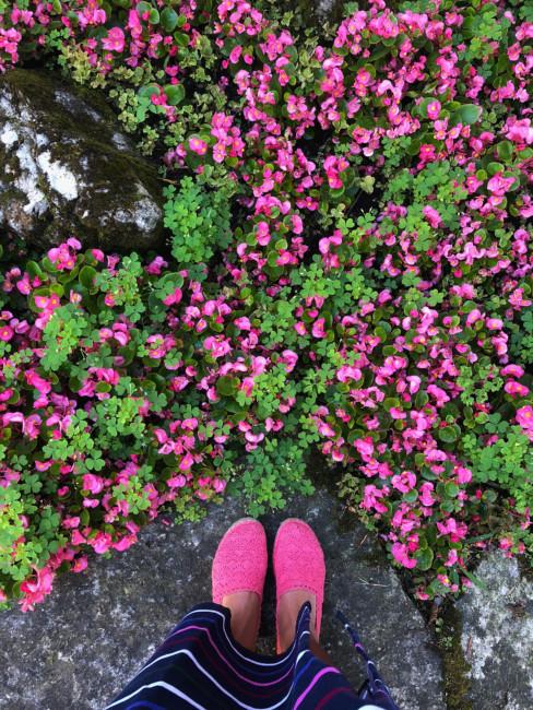 Fiori rosa - Pink flowers.