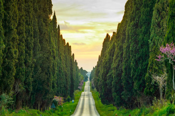 What is worth visiting Bolgheri in Tuscany