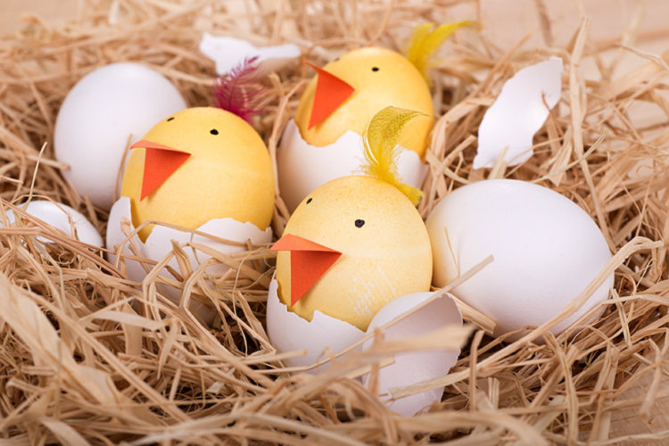 Easter chick eggs.