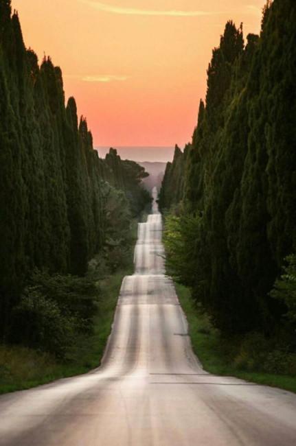 Viale dei cipressi.