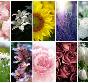 Meaning of flowers to decorate your home
