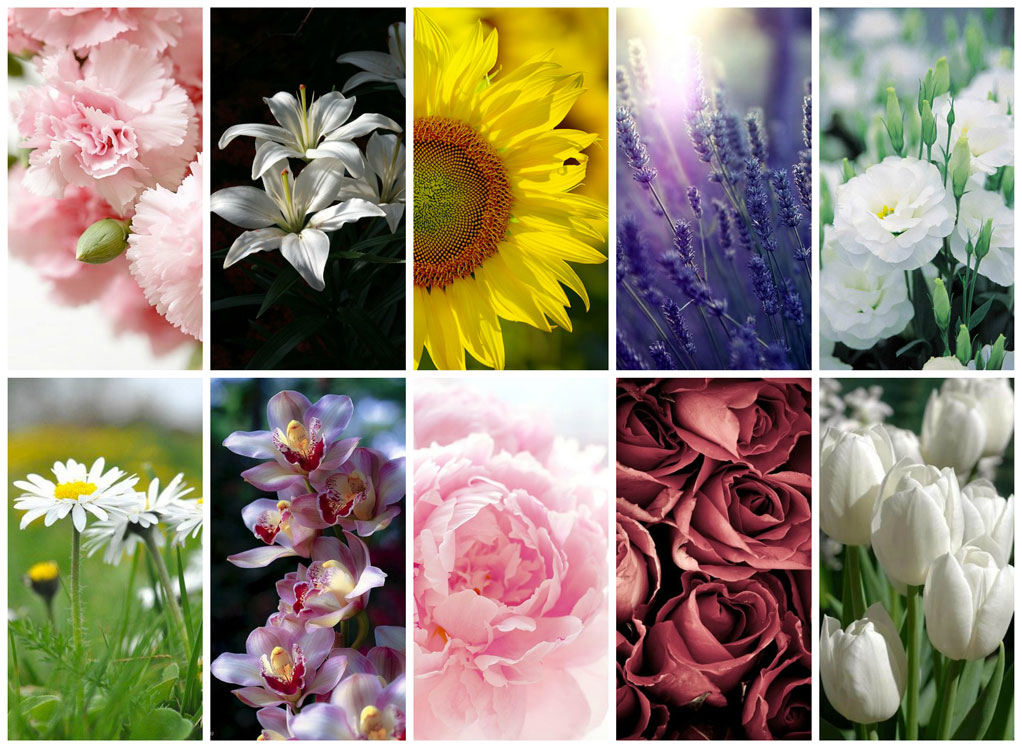 Significato dei fiori per decorare casa - Meaning of flowers to decorate home.