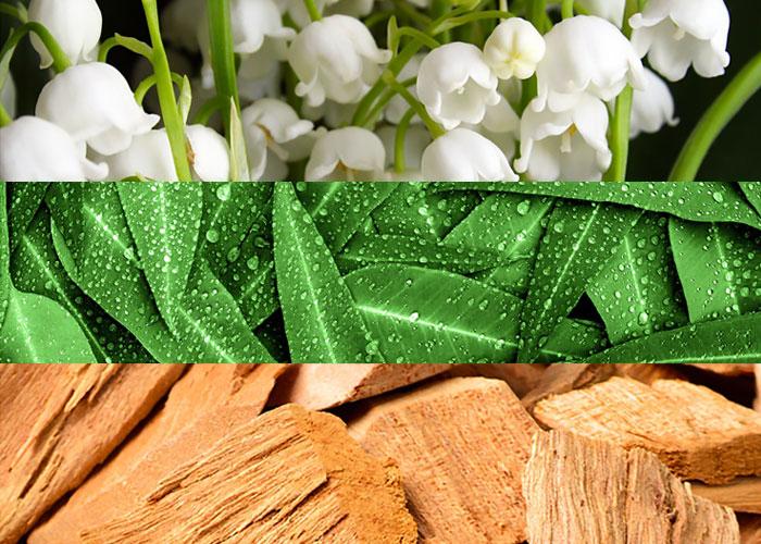 Composizione e note olfattive del profumo Contradiction di Calvin Klein.